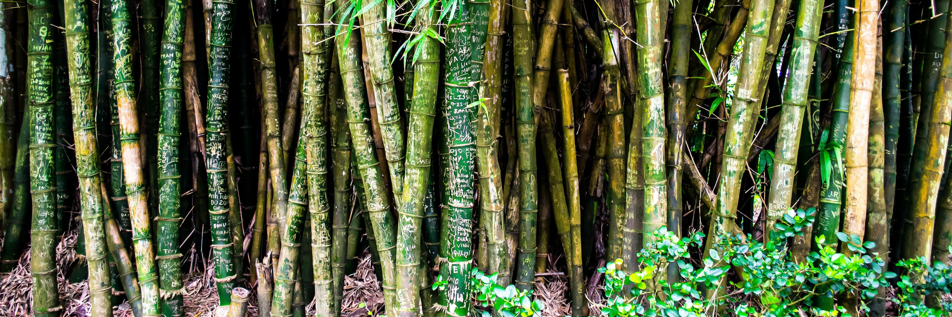 5 Reasons Why Bamboo Is A Better Fabric