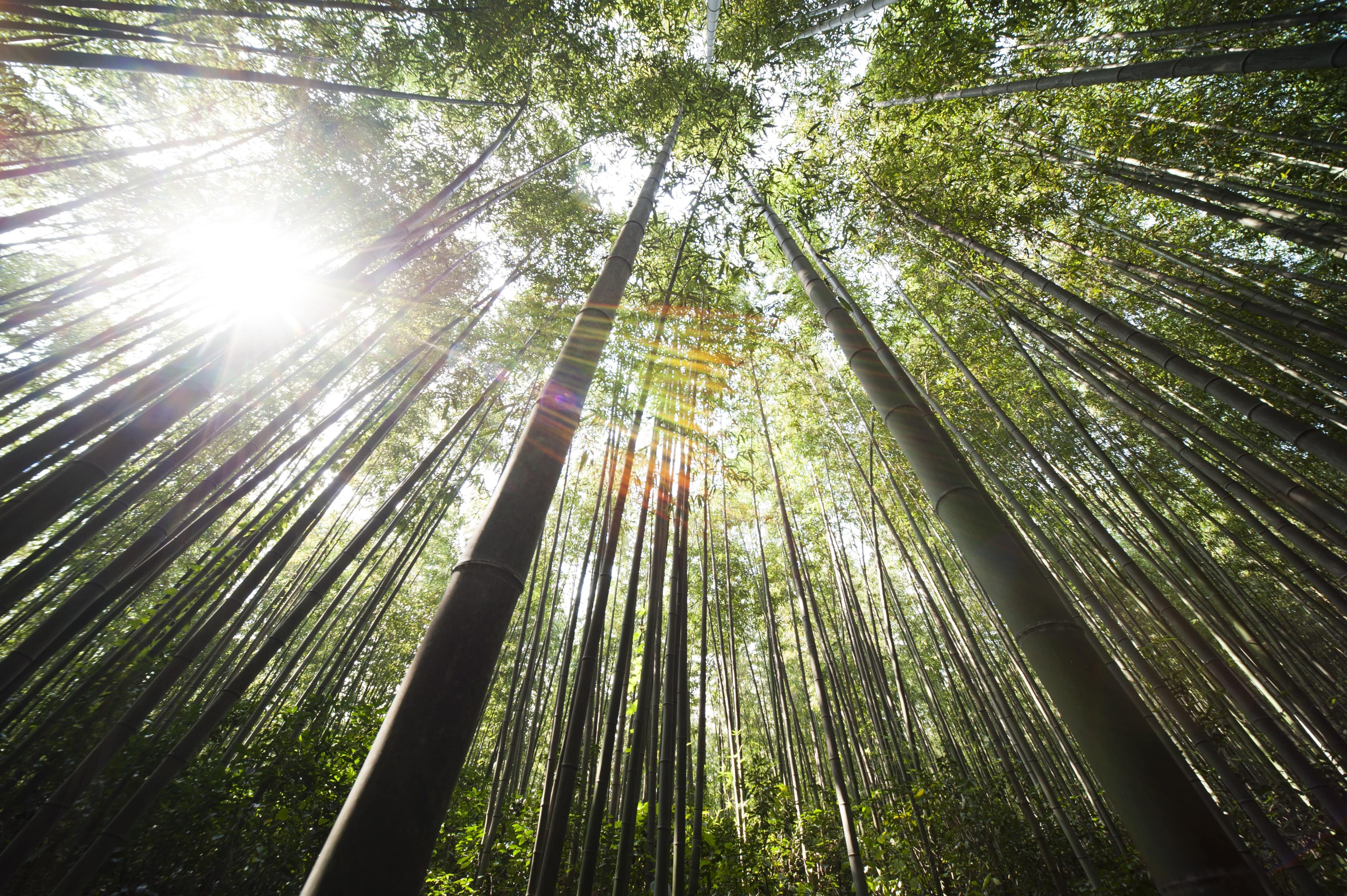 Bamboo is the most sustainable underwear fabric