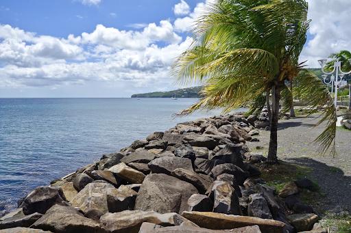 Palm tree near a waterbody with big rocks