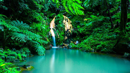 Scenic picture of a waterfall covered with greenery on all sides at Azores