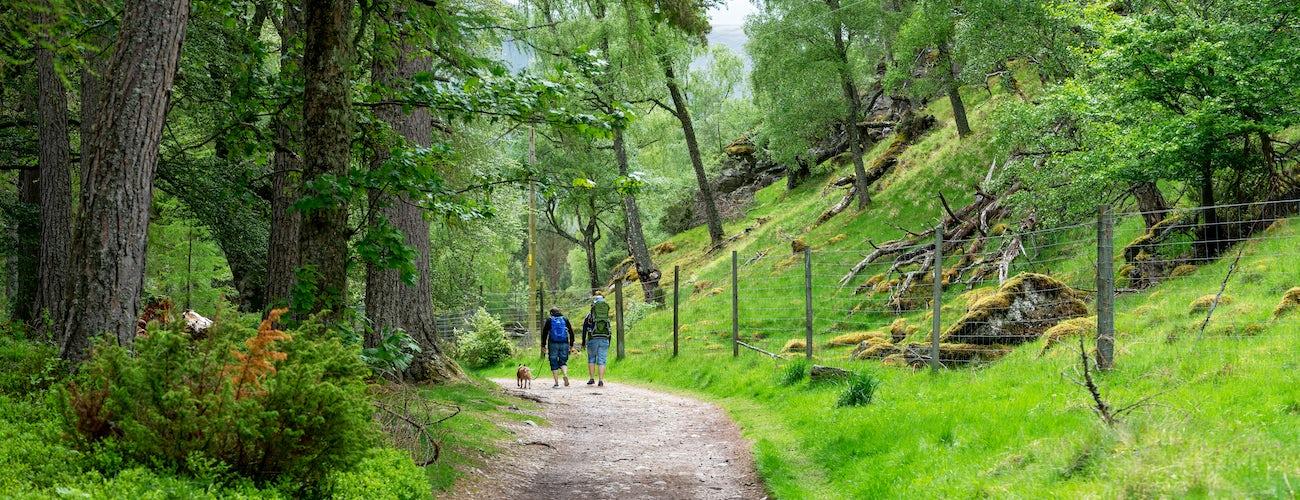 Rothie Forest Walk