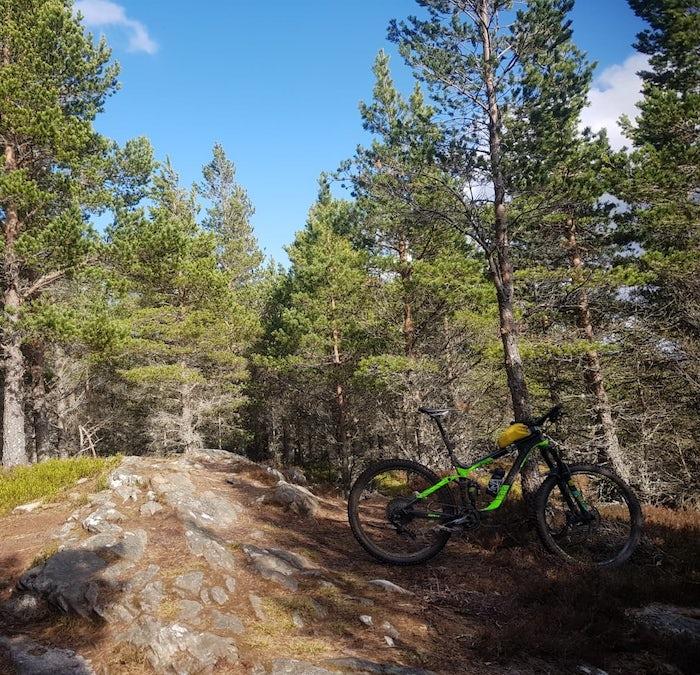 Forest Bike Cairngorms