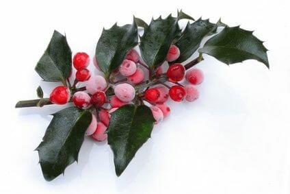 Hazen Plastic Surgery and Medspa Blog   Happy Holidays from Hazen Plastic Surgery P.A.!