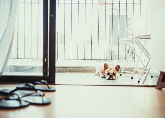 INFOGRAPHIC: 5 things we've learned from remote working