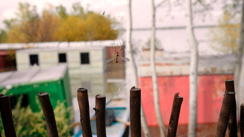 The Mosquito Problem and other Stories