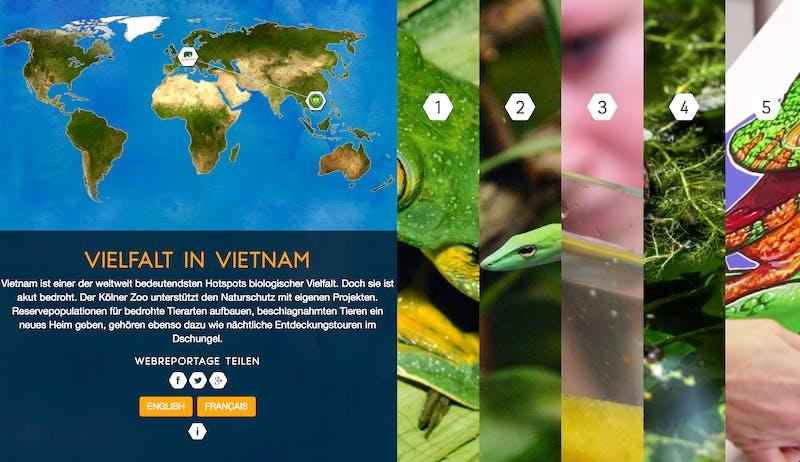 Frogs & Friends Web Reportage