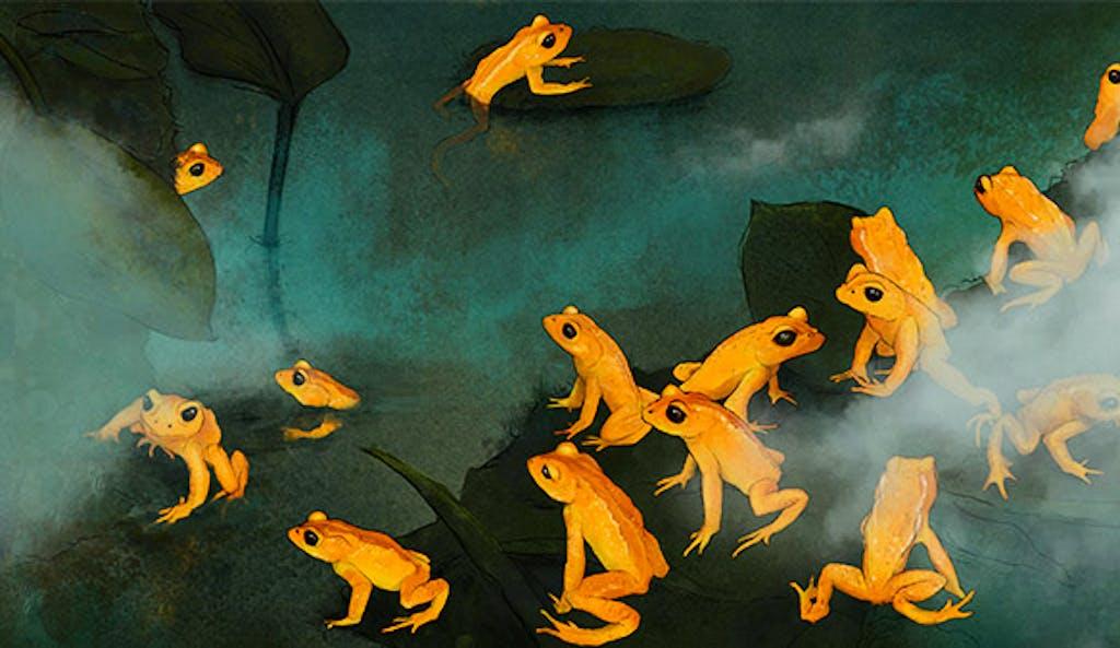 Frogs & Friends Interaktive Exkursion