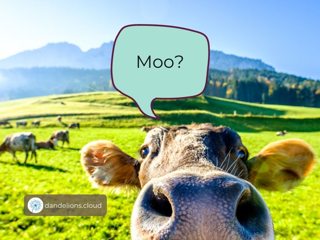 Not the kind of cows we are talking about!