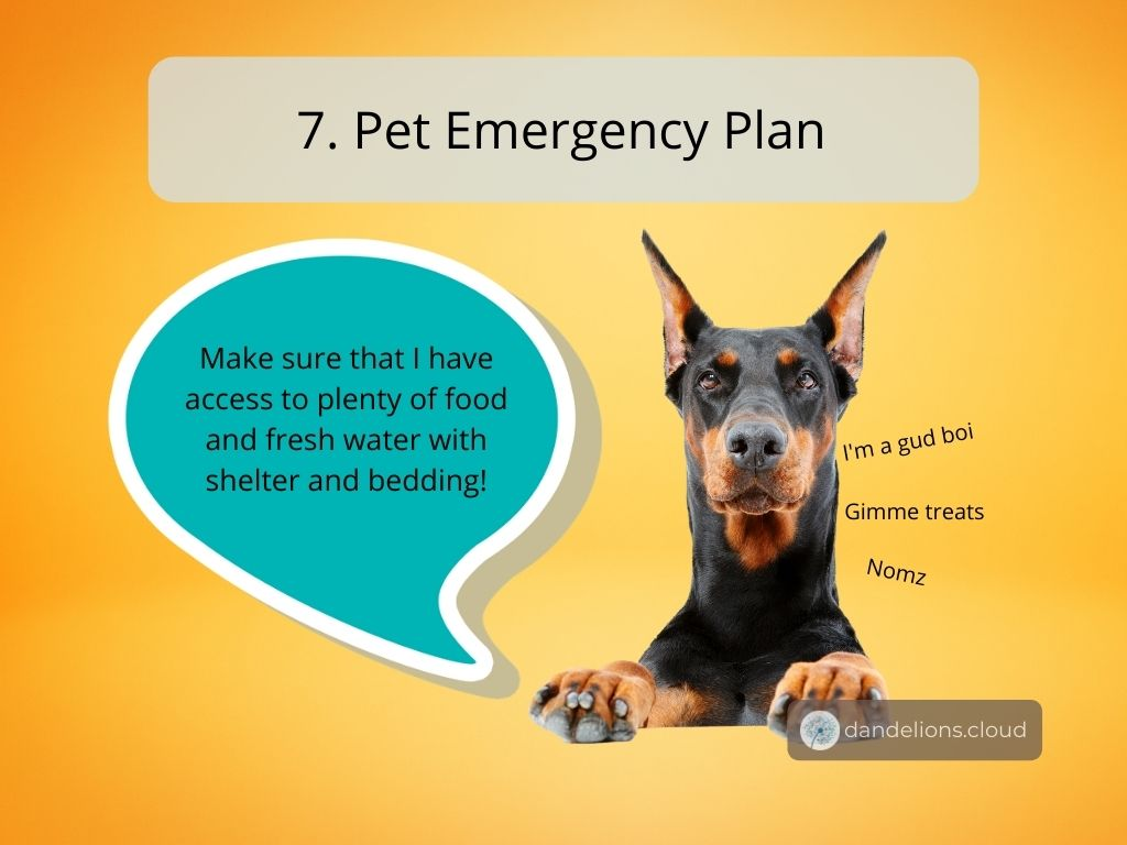 Make sure that your pets have access to food, water, shelter and bedding