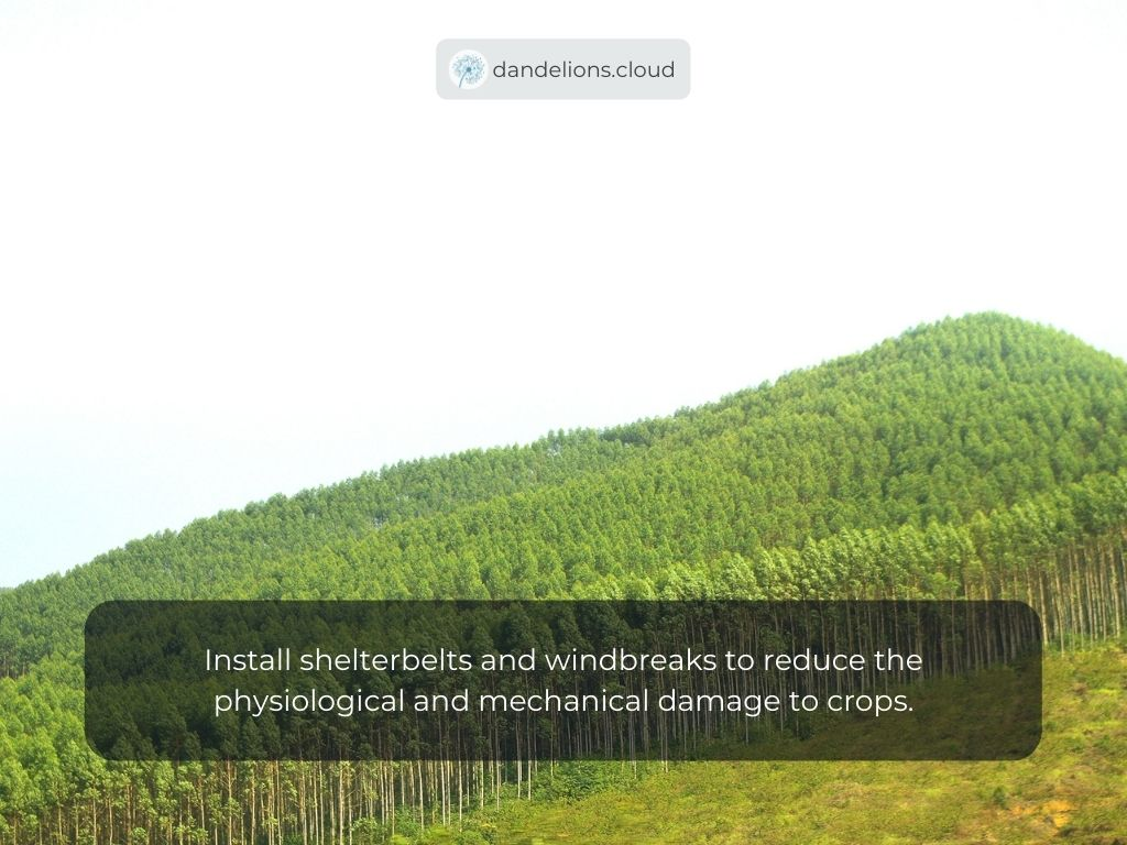 Install shelterbelts and windbreaks to reduce the physiological and mechanical damage to crops.