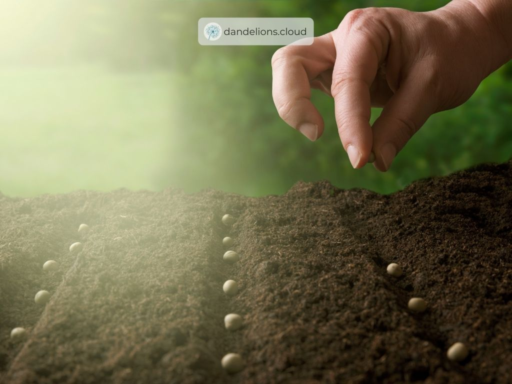 Planning The Best Times For Planting