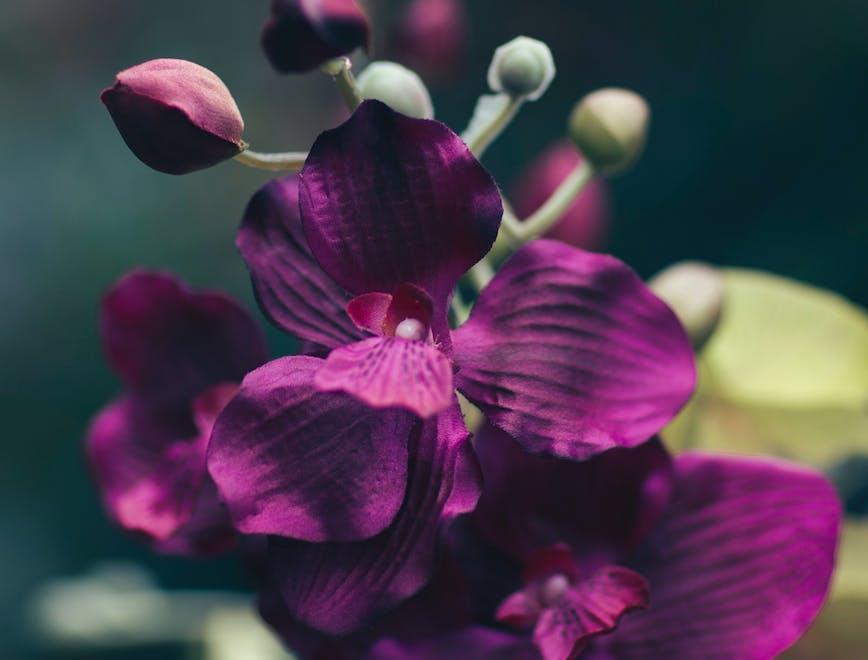 piante in casa benefici