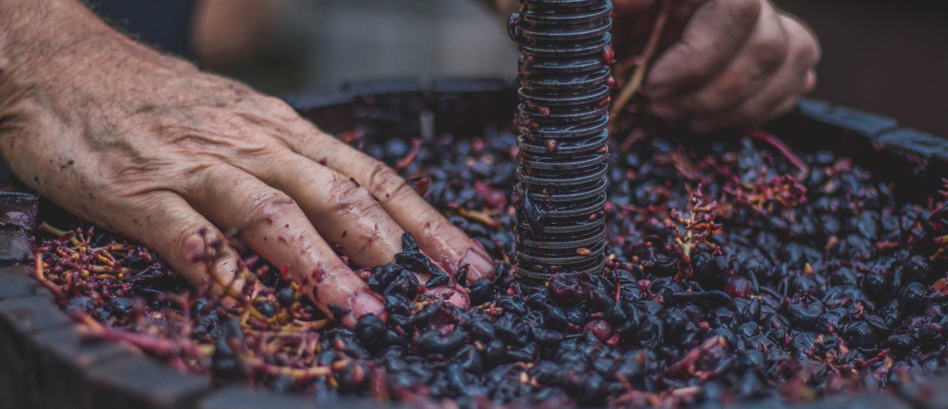 I migliori vini del 2019 - L'Officiel Italia