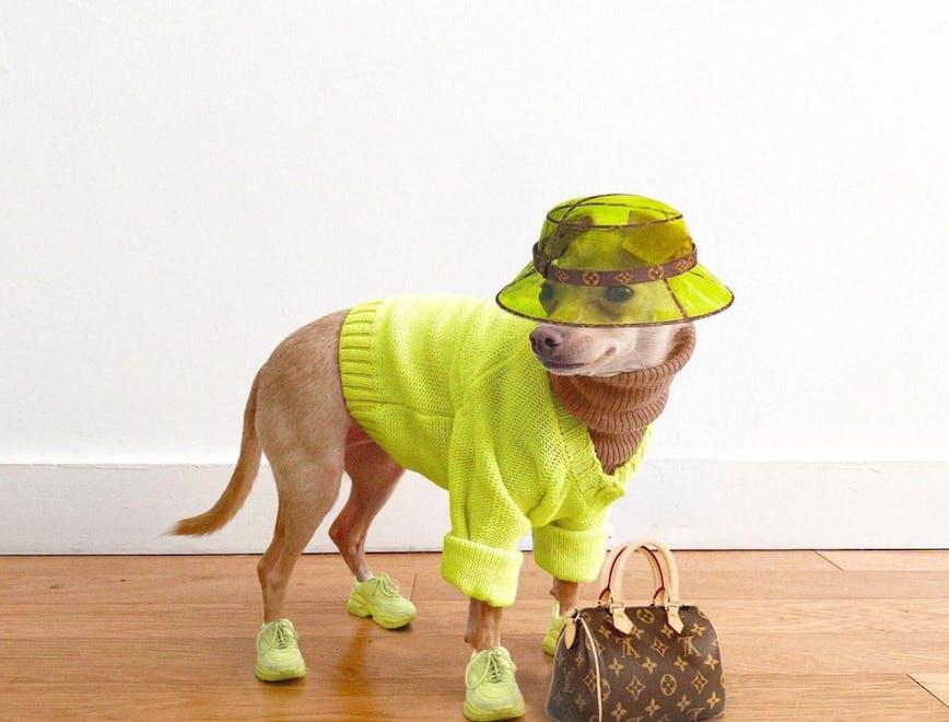 La cagnolina chihuahua indossa un look con occhiali da sole e foulard