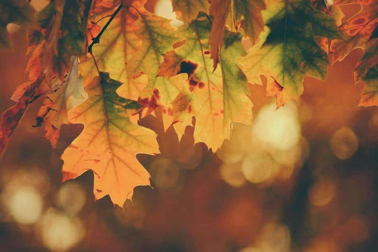 5 ideas for autumnal holidays in the UK