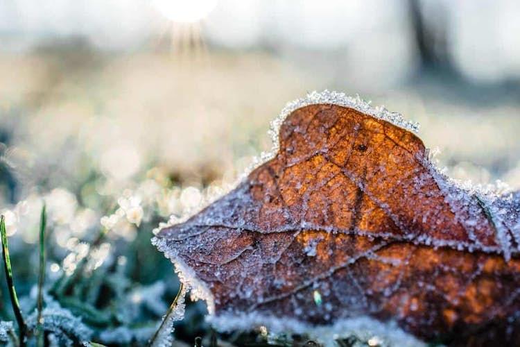 How to keep your garden going through winter