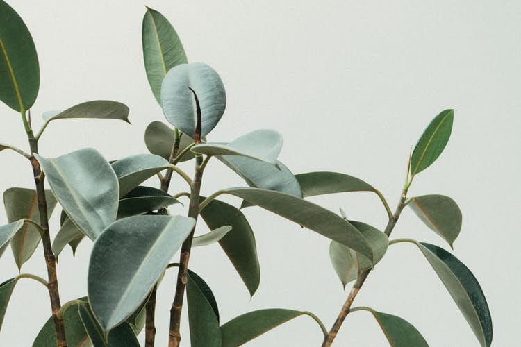 Top 10 house plants to buy in 2021