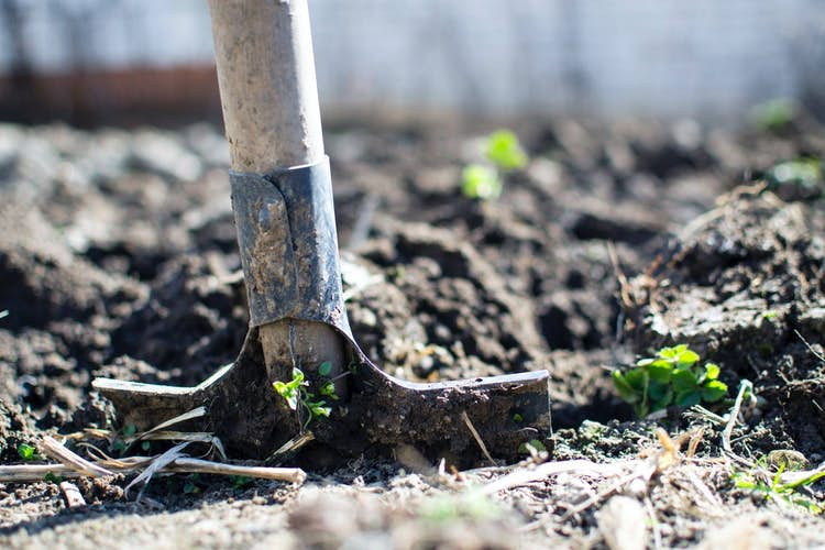 How to get started with an allotment