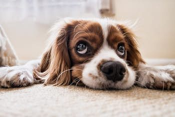 How long can you leave dogs alone?