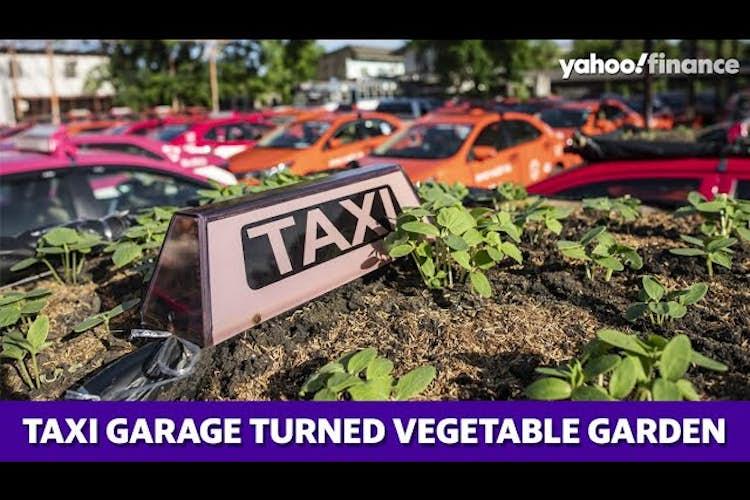 Thai taxi-garage converted into vegetable garden