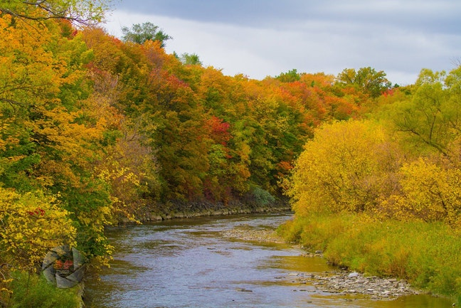 A river surrounded by trees in autumn