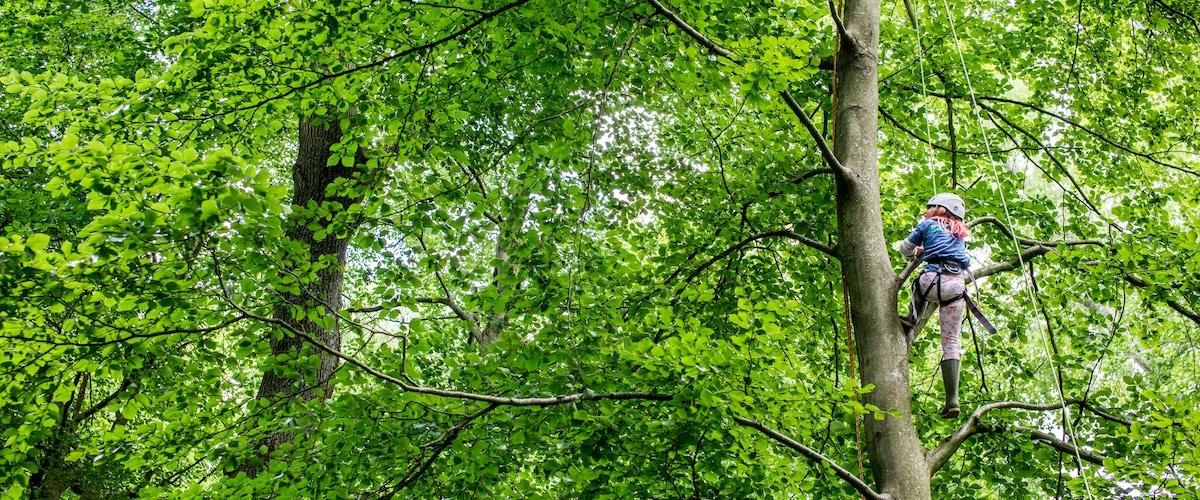 Wild Wood Forest School