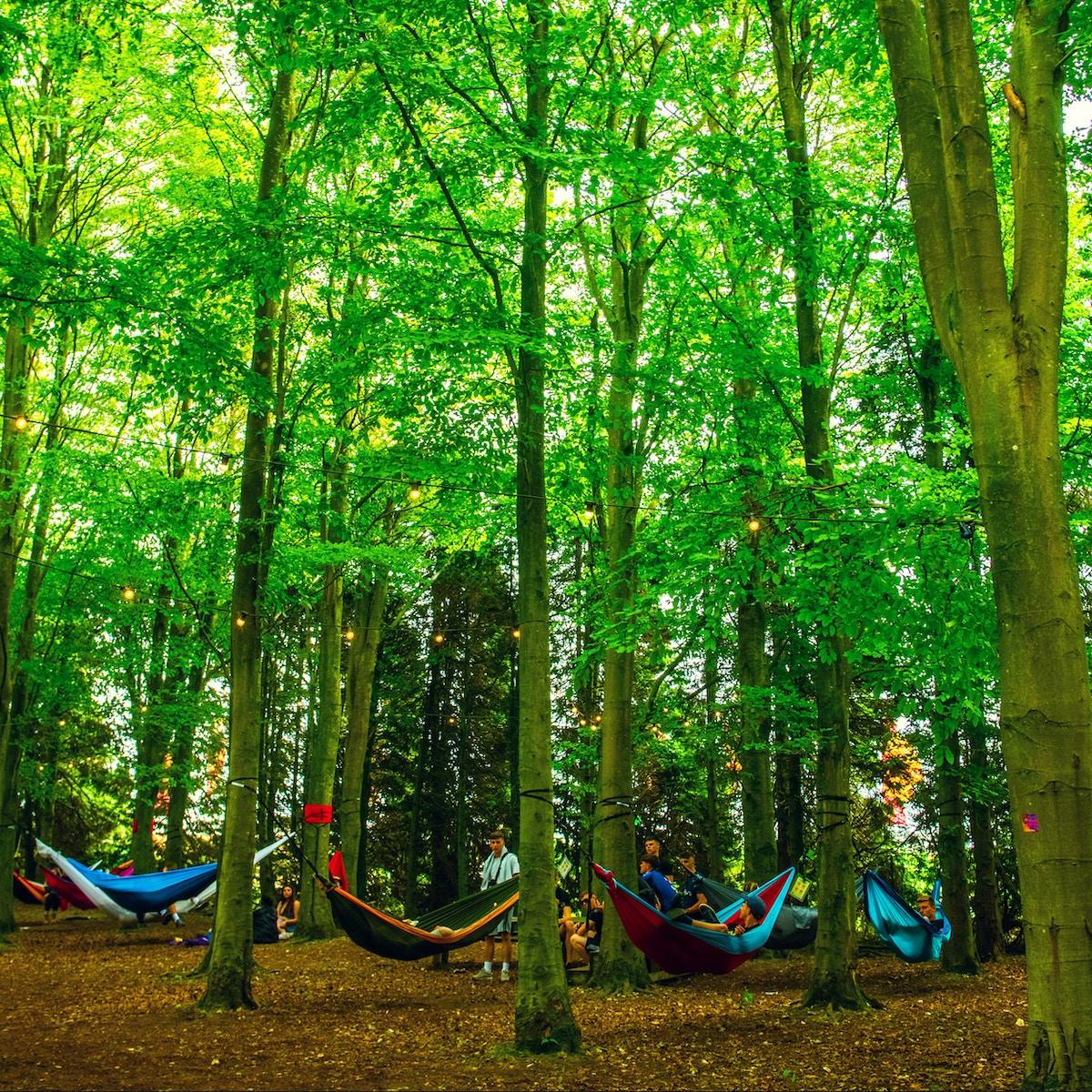 Boomtown Forest