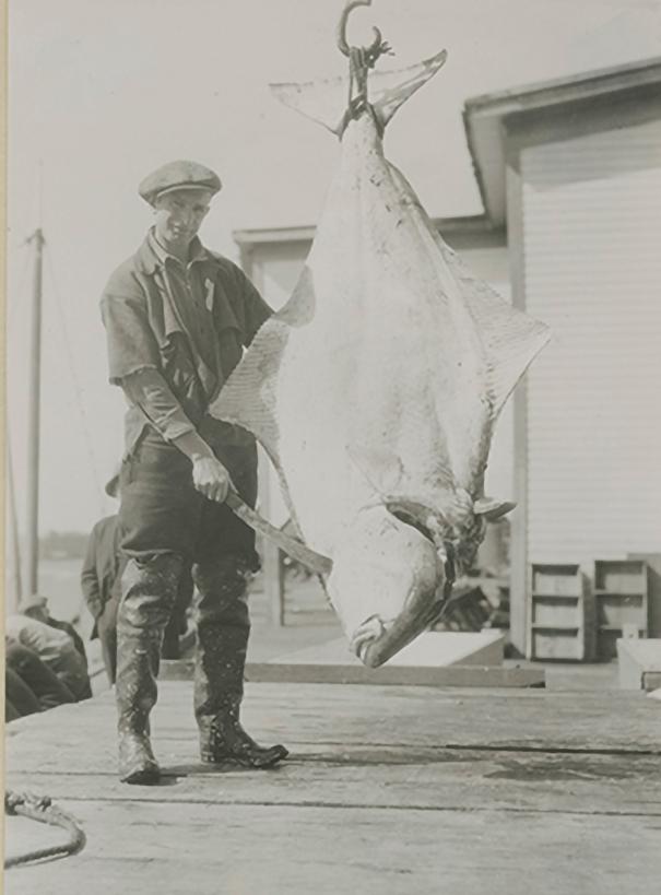 Ketchikan Cold Storage Worker with Halibut, 1930.