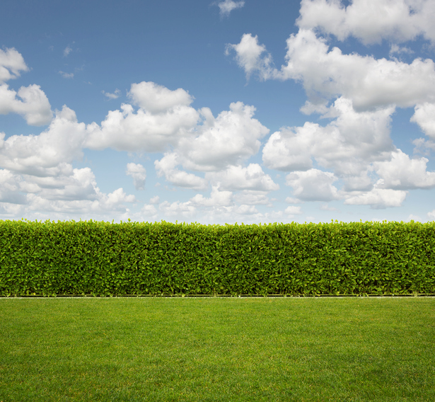 Do you need a hedge? Image