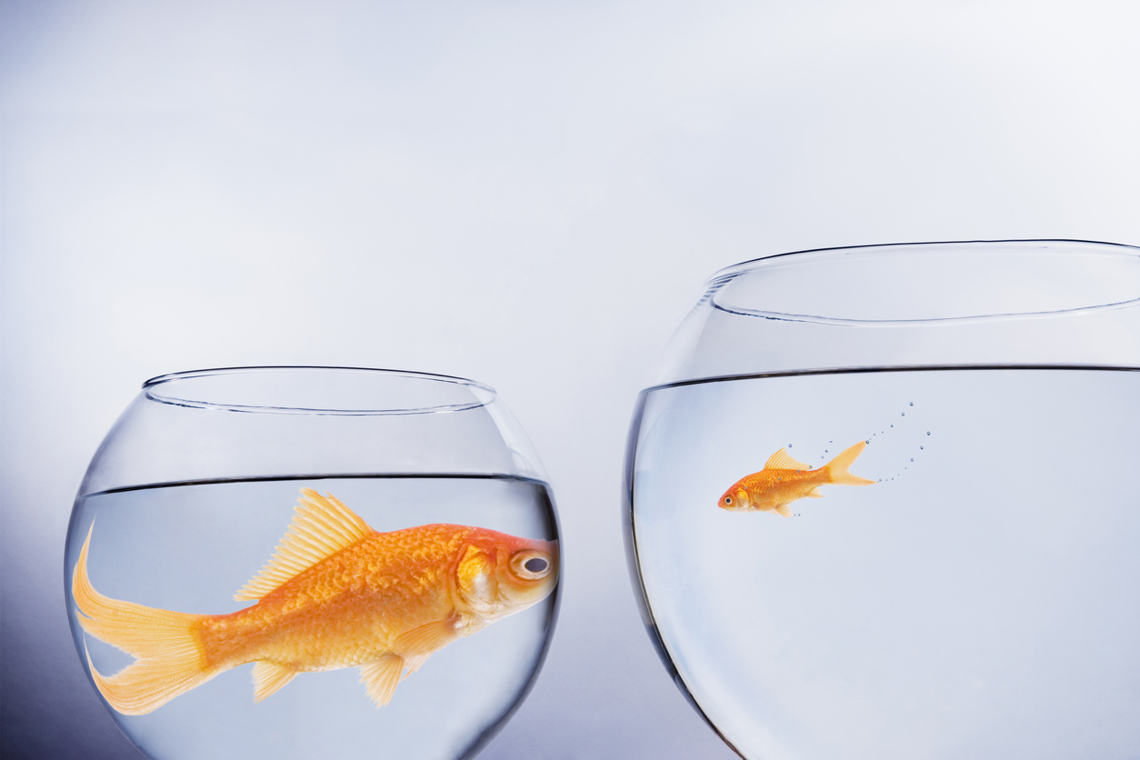 big vs small fish