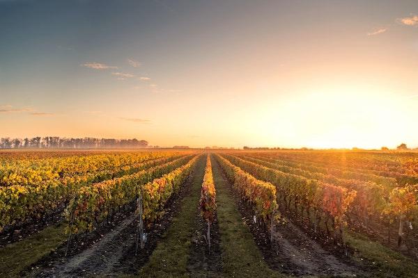 1517848722 chianti wineyards