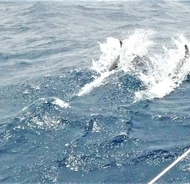 1554990287 delfini 600x580
