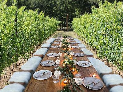 Degustazione e cena romantica in Vigna service acacia firenze