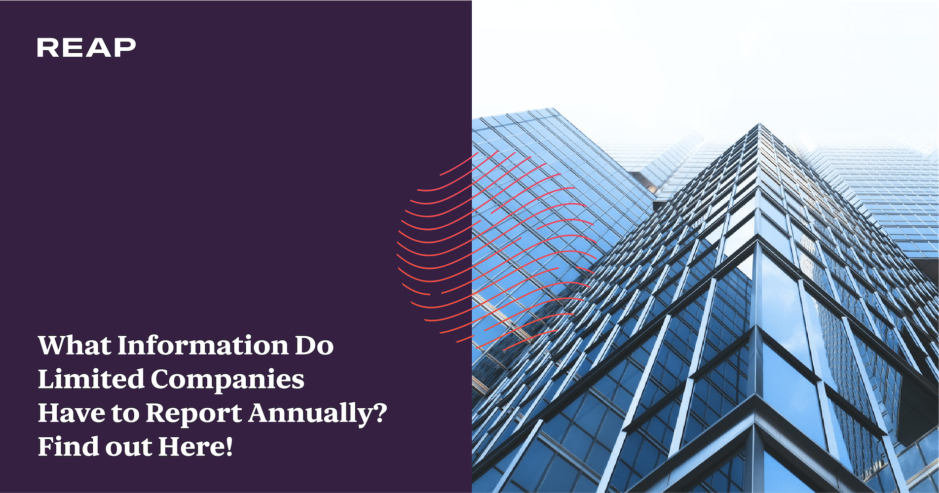Cover Image for What Information Do Limited Companies Have to Report Annually? Find out Here!