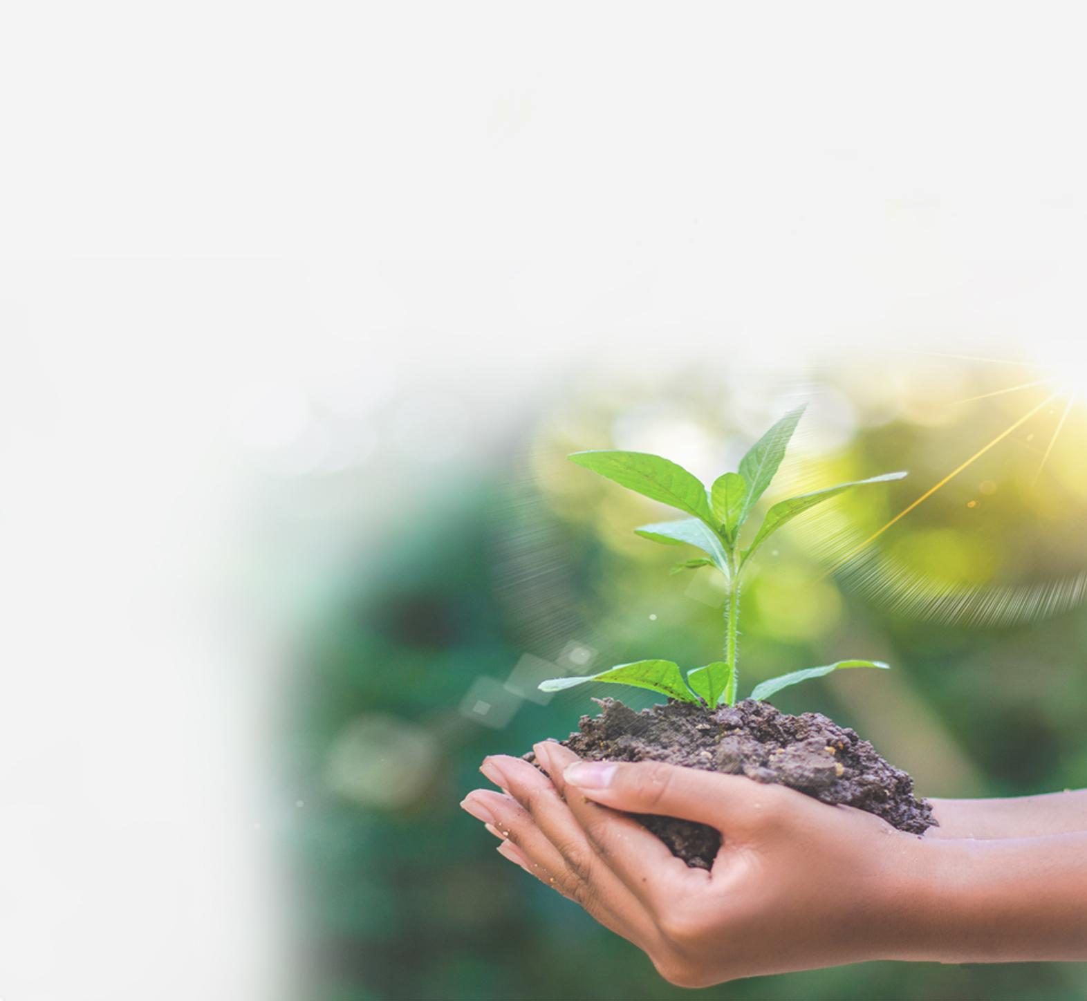 Nachhaltigkeit2