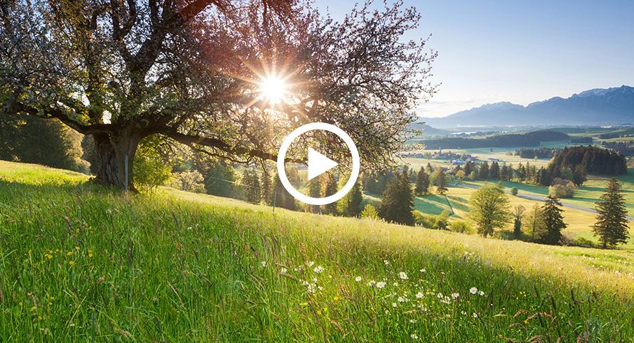 Teaser_hipp_bioweitergedacht_landschaft