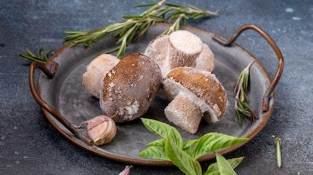 Pilze einfrieren