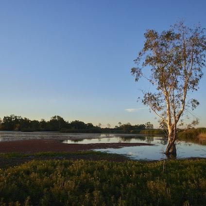Landcare Wetlands