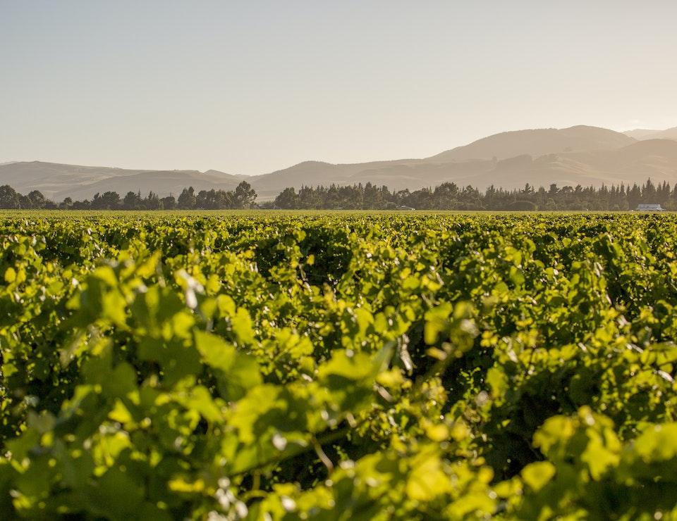 Mound Vineyard
