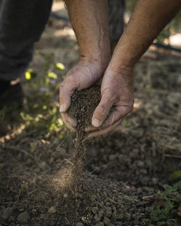Dirt Vineyard