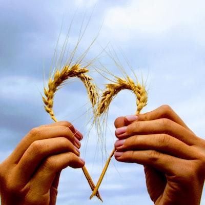 Mani di donna che formano un cuore con spighe di grano