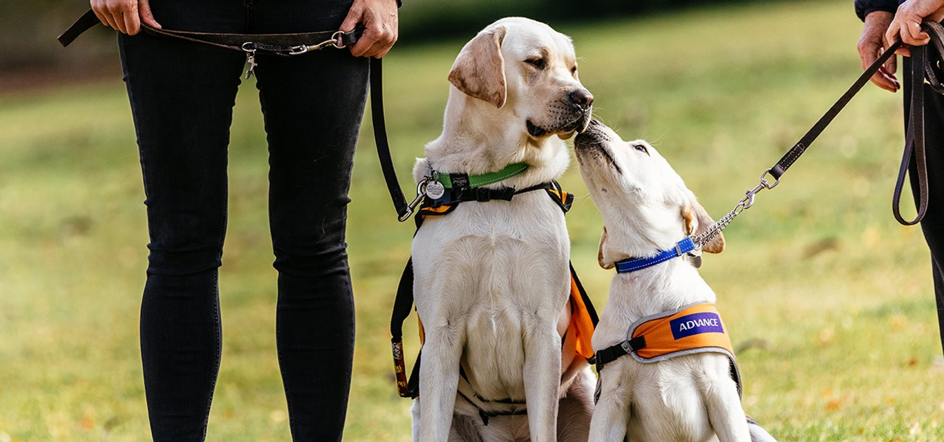 Community guide dogs