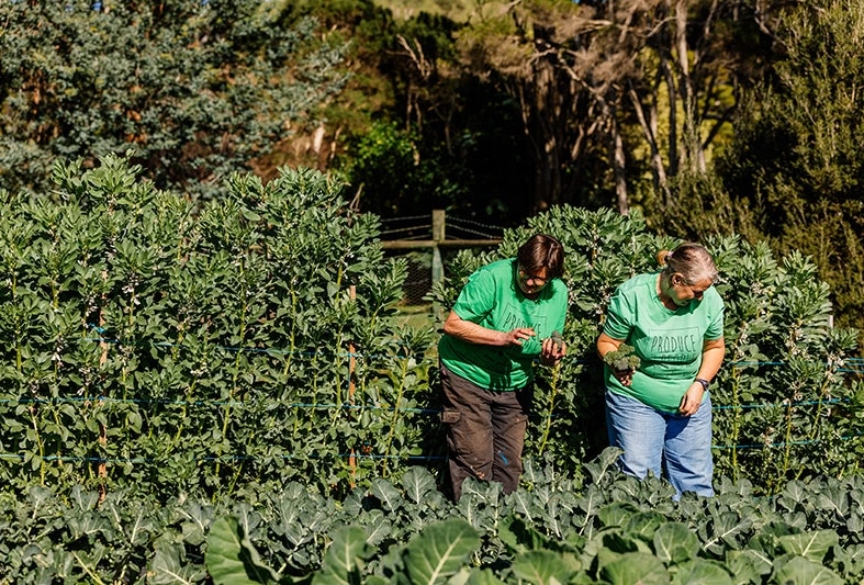 Two ladies working in the garden