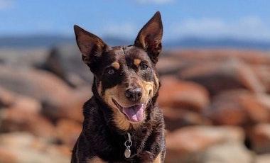 Dog smiling at camera
