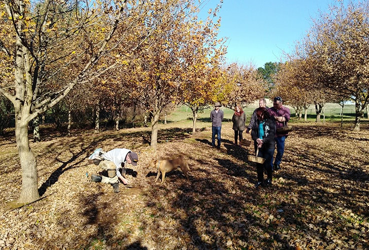 A group of guests searching for truffles