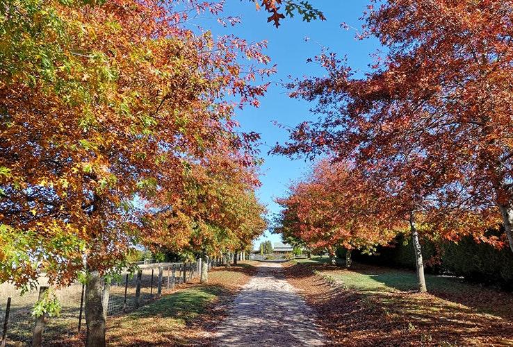 Autumn colours on the farm.