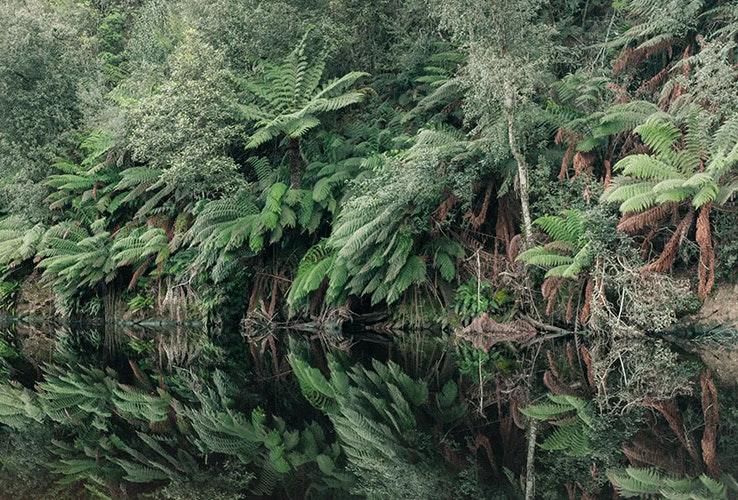 Tasmanian wilderness near Burnie