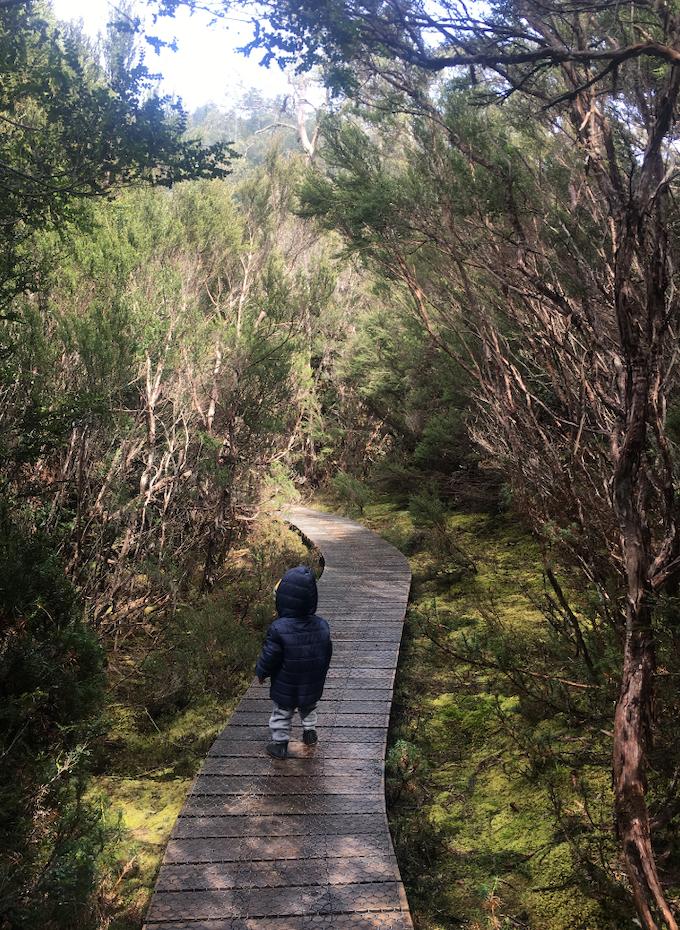 Child walking along duckboards in bushland