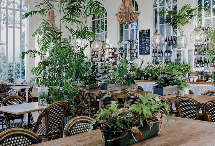 Floor and table covered in plants