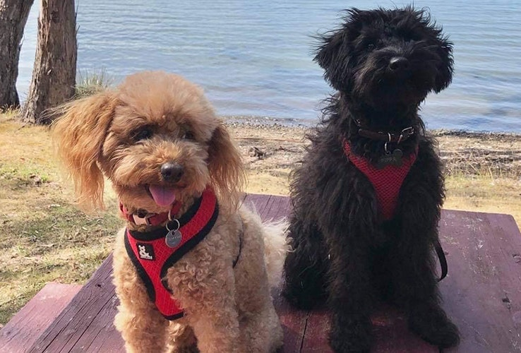 Two dogs at water's edge